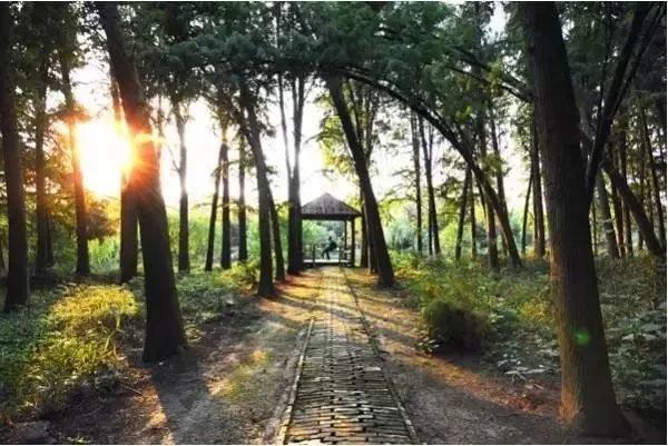 止马岭森林公园地图