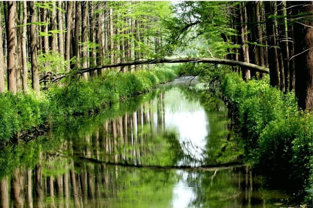 江浙沪这些罕见的水上森林 即将迎来最美的时候!